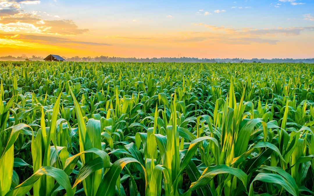 AGRICULTURAL EXPORT INDUSTRY CHANGES